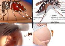 Como se contagia el chikungunya