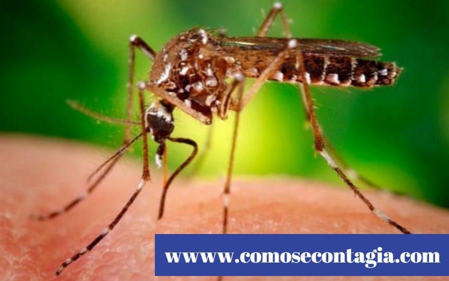 Como se contagia el zika