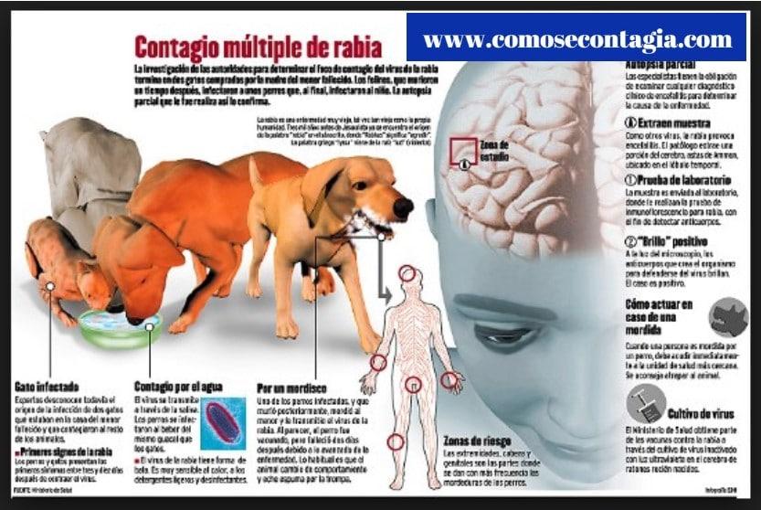 Como se contagia la rabia de un perro a un humano