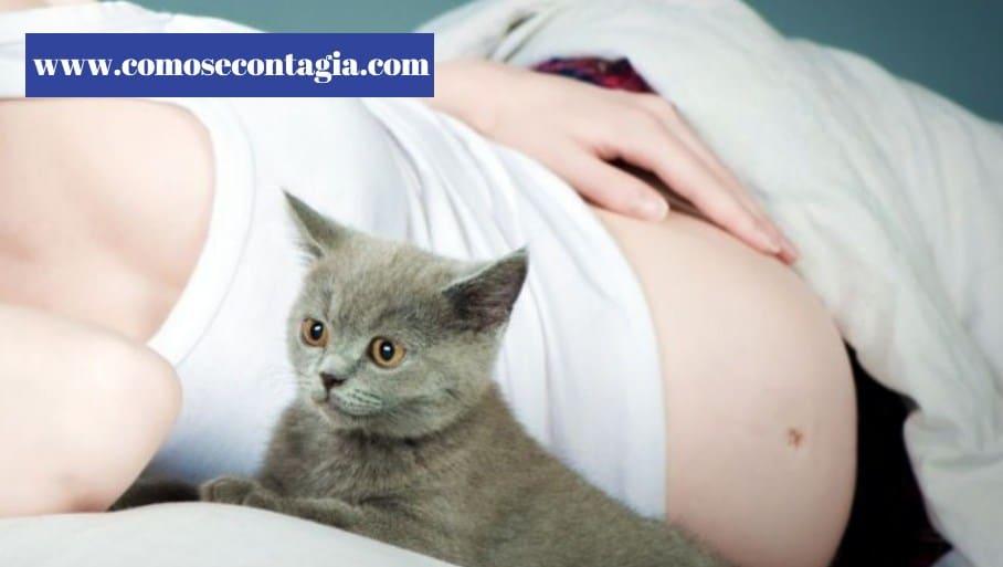 Como se contagia toxoplasmosis en el embarazo